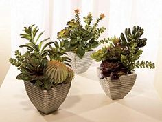 Set of 3 Chic Botanical Potted Decorative Southwestern Succulents 10 ** Check out the image by visiting the link.