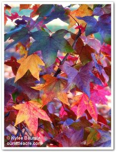 Wordless Wednesday:  LEAVES