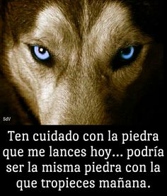 Think obout it. Lion Quotes, Wolf Quotes, Bible Quotes, Spanish Inspirational Quotes, Spanish Quotes, Positive Phrases, Motivational Phrases, Strong Quotes, True Quotes