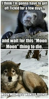 Browse the best of our 'Moon Moon' image gallery and vote for your favorite! Cute Animal Memes, Animal Jokes, Funny Animal Pictures, Cute Funny Animals, Dog Jokes, Funny Dog Memes, Moon Moon Memes, Animals And Pets, Baby Animals