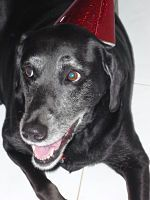 Pepsi - Assistant taste tester for Pampered Pooch Parties & Barkery Treats