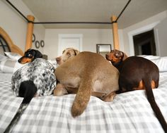 Embedded, with all my friends who are behind me as we tackle my owner's bed.