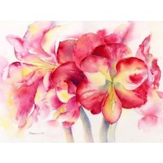 Amaryllis Flower Print By Sheila Gill. Greeting Cards | Gifts | Fine Art | Prints
