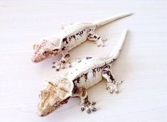 Feeding Your Bearded Dragon In The Right Way Cute Reptiles, Reptiles And Amphibians, Mammals, Animals Beautiful, Cute Animals, Glitter Beards, Bearded Dragon Cute, Cute Gecko, Crested Gecko