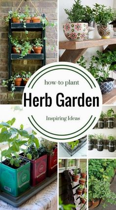 Genius Herb Garden Ideas that anyone can do! How to plant an herb garden in a container, a window box, a full garden, a coffee cup or in a metal bucket. Easy Indoor Herb Garden Designs To Try Diy Gardening, Container Gardening, Organic Gardening, Kitchen Gardening, Kitchen Garden Ideas, Flower Gardening, Small Herb Gardens, Outdoor Gardens, Home Vegetable Garden