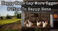 Happy Hens Lay More Eggs: 8 Tips To Happy Hens