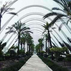 Net-ure. #nature #architecture #net #trees #Valencia #Spain #españa Valencia Spain, Sidewalk, Trees, Architecture, Places, Instagram Posts, Nature, Arquitetura, Lugares