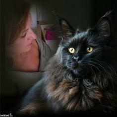 Here kitty kitty Here Kitty Kitty, My Photos, Animals, Musica, Cat Breeds, Infinity Symbol, Animales, Animaux, Animal