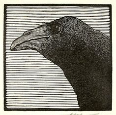 Barry Moser : Crow at Davidson Galleries - love this image.