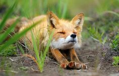 BBC best picture set. Fox stretching.