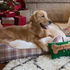 Everyone in the family deserves a cozy gift this year, especially the Shop pet beds in our bio. Pet Beds, Dog Bed, Doggie Beds, Cute Funny Animals, Funny Animal Pictures, Animal Pics, Husky Collie Mix, Dog Breeds List, Christmas Puppy