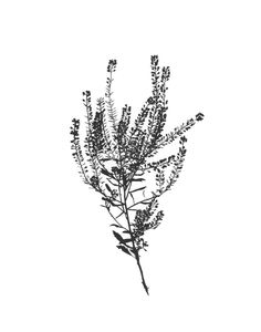 'Botanical No. 1' print by Mia Carameros #giftsforher