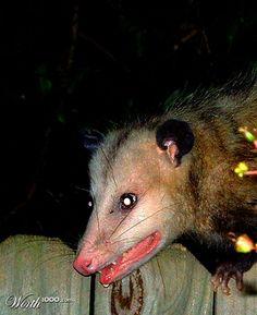 Scary Possum - Worth1000 Contests