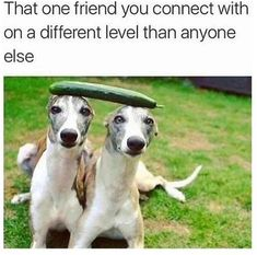 That One Friend You Connect With On A Different Le. ~ Memes curates only the best funny online content. Funny Best Friend Memes, Crazy Funny Memes, Funny Animal Memes, Really Funny Memes, Stupid Funny Memes, Funny Relatable Memes, Haha Funny, Lol, Funny Quotes