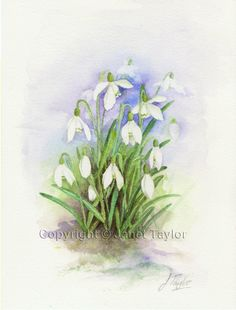 Snowdrops. Watercolour painting by Jan Taylor: ORIGINAL watercolor, not a print. by KeepersCottageArt on Etsy