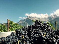 Welcome to the #SwissWinelands  Info & booking at www.wine-tours.ch  #WineToursSwitzerland #swisswine #swissfinewine #schweiz #GToS #VERLIEBTindieSCHWEIZ #Funonwineries #winery #winetour #SwissAlps #switzerland #lovepinotnoir #graubünden #completer #winetastings #culinary #culture #art #badragartz #grandresortbadragaz #BündnerHerrschaft #wineswiss #greatfood #mulitilingualguidesswitzerland #conciergeservice #lovepinotnoir #completer #pinotrhein #vinotiv #fullservice #oenotours #vintagetours…
