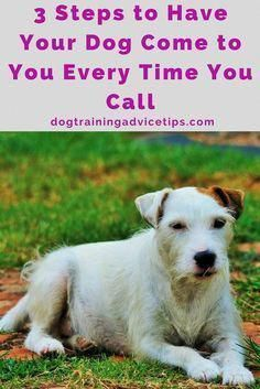 New Help For Dog Training Tips Do You Want To Treat Your Dog