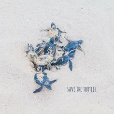 Baby sea turtles reminds me of Cancun Cute Baby Turtles, Cute Baby Animals, Animals And Pets, Beautiful Creatures, Animals Beautiful, Kinds Of Turtles, Turtle Time, Ocean Creatures, Tier Fotos
