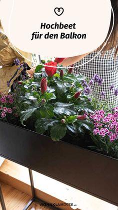 Ein Hochbeet für den Balkon verwöhnt Dich bis in den Winter hinein mit frischen, nährstoffreichen Kräutern, Obst und Gemüse. Doch auch Blumen fühlen sich hier richtig wohl. Zudem ermöglicht Dir die rückenschonende Arbeitshöhe eine einfache Pflege Deiner Pflanzen. Bei WOHNKLAMOTTE erfährst Du alles, was Du zur Bepflanzung eines Hochbeetes wissen musst. Plants, Ornamental Plants, Potting Soil, Compost, Small Trees, Planting, Fruit And Veg, Plant, Planets