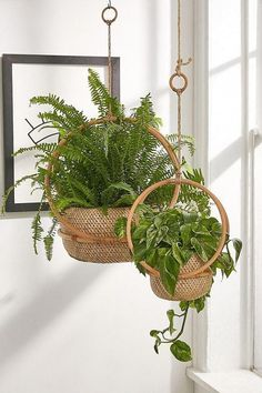 Container Gardening For Beginners Lead a lush life with this woven, hanging rattan planter. Featuring woven basket with rings set around and joining at top with corded binding for secure construction Planet Decor, Indoor Vegetable Gardening, Organic Gardening, Container Gardening, Gardening Books, Gardening Tips, Succulent Containers, Gardening Quotes, Gardening Vegetables
