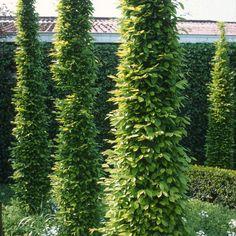 Landscaping Berm Ideas, Garden Projects, Garden Tools, Deck Enclosures, Building A Fence, Backyard, Patio, Topiary, Garden Beds