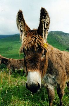 Donkeys make my heart pitter pat