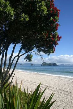 Travel Inspiration for New Zealand – Hahei Beach, New Zealand. New Zealand Beach, New Zealand Travel, Most Beautiful Beaches, Beautiful Places, The Places Youll Go, Places To See, Islas Cook, Seen, The Beautiful Country