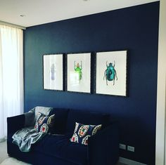 Black wallpaper feature wall with bug pictures framed Black Wallpaper, Picture Frames, Gallery Wall, Pictures, Home Decor, Portrait Frames, Photos, Decoration Home, Black Background Wallpaper