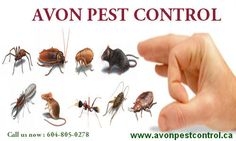 Avon pest control companies in Canada provides the most reliable solution to your pest problems with a reasonable, efficient and professional pest control services.