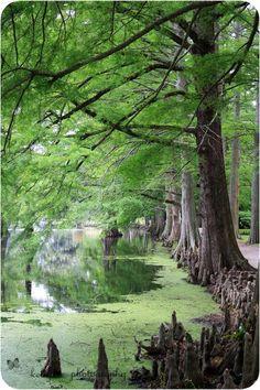 Swan Lake and Iris Gardens Sumter, SC (nothingfiner)