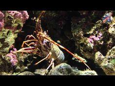 #sphimmstrip  vi porta all'Acquario di Genova  http://www.sphimmstrip.com/2014/05/a-genova-per-vedere-lacquario-liguria.html?m=1