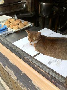 (ะ`♔´ะ)  #neko #cat #umiani (via kubotoru_chrono)