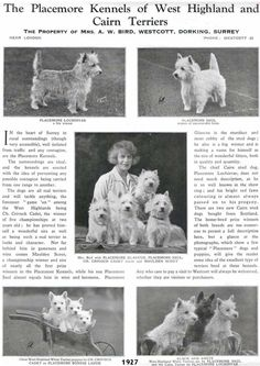Mrs. Birds West Highland Terriers and Cairn Terriers. 1927.