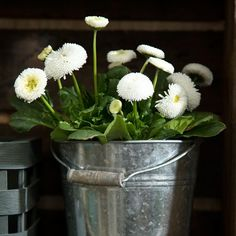 An alternative flowerpot for nature's treasures // Zinc bucket, available in three sizes. Prices from DKK 3,98 / ISK 109 / SEK 5,48 / NOK 5,90 / EUR 0,58 / GBP 0,54