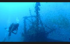 Soooo many fish on the wreck dive! Diving School, Diving Course, Padi Diving, Fish, Image, Pisces