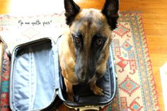 Yes ... our dog knew what our suitcases meant when we went on vacation. And he was VERY happy when we put them away afterwards :)