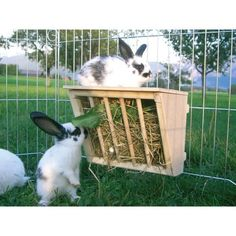Rabbit Hay Racks - What are the Options? - Bunny Approved - House Rabbit Toys, Snacks, and Accessories Bunny Cages, Rabbit Cages, Rabbit Toys, Meat Rabbits, Raising Rabbits, Rabbit Life, House Rabbit, Goat Hay Feeder, Rabbit Feeder