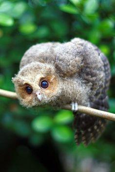 little owl by fotopaty :) on Flickr.. Fuzzy little #owlet..