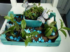 Décoration sur le thème de bleu, avec des plantes vertes et des cailloux bleus