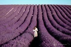Lavender fields of Provence photographed by Soh Photography. #sohphotography #bruckanderleitha #teammelzer #фотограф в вене #прованс #лавандовые поля #наталиямельцер Provence, Destination Wedding, Photo Galleries, Waves, Photoshoot, Gallery, Photography, Outdoor, Image