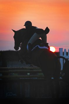 Hold up the lies darling fromthehaunches: sunset hunter derby (myphotocred) - Art Of Equitation Cute Horses, Pretty Horses, Horse Love, Horse Girl, Horse Photos, Horse Pictures, Most Beautiful Animals, Beautiful Horses, Cavalo Wallpaper