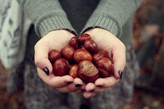 Buckeyes! I use to go buckeye hunting with my dad all the time :(
