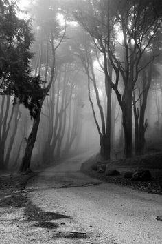 light example photo 367 fog