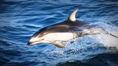 Dolphin Following Ship