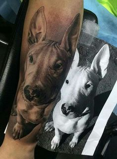 Bull Terrier Tatts