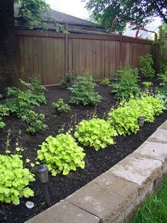 Landscape design ideas - native BC west coast plants | Landscaping ...