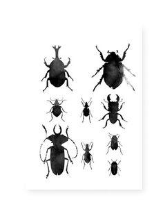 Watercolour beetles print // RK Design