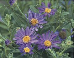 59 Best and Beautiful Flower Garden Ideas Beautiful flowers