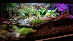 Newly planted dart frog vivarium with flowering begonias