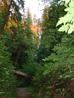 munson creek falls, oregon